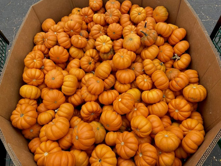 Pumpkin patches are an easy family-friendly way to create many fun activities while staying socially distanced